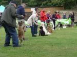 Image: Bark in the Park Dog Show